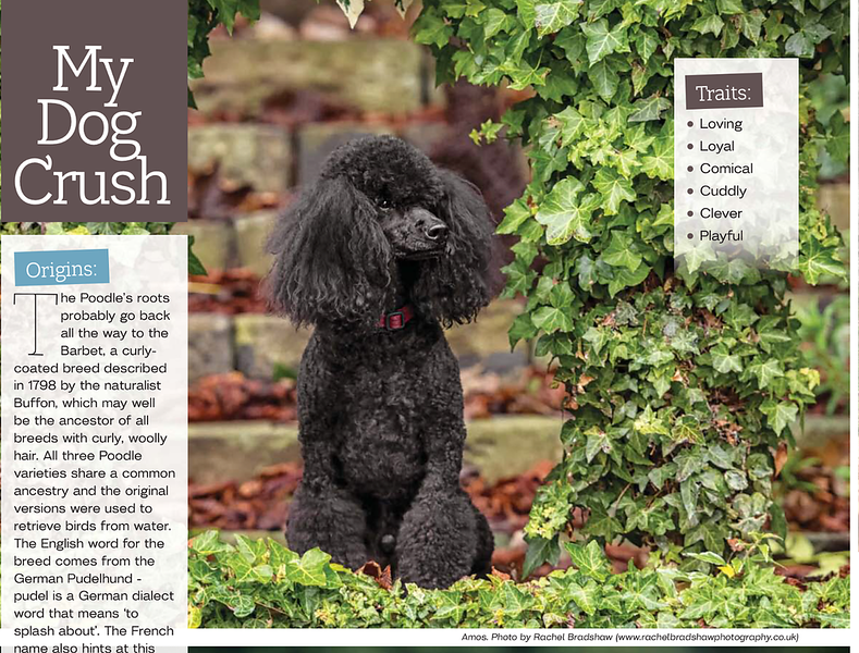 Dogs Today Magazine March 201