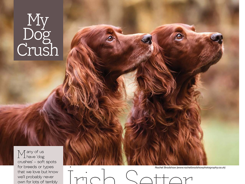 Dogs Today Magazine February 2017