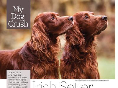 Dogs Today Magazine February 2017