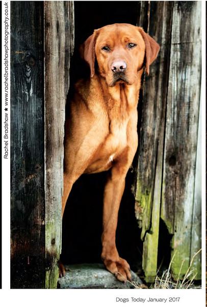 Dogs Today Magazine January 2017