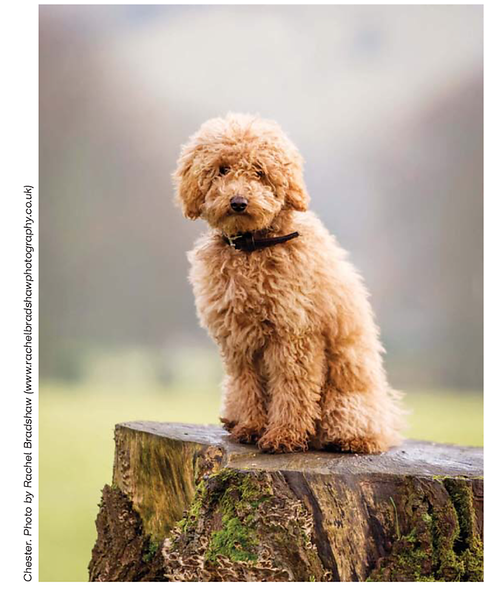 Dogs Today Magazine March 2017