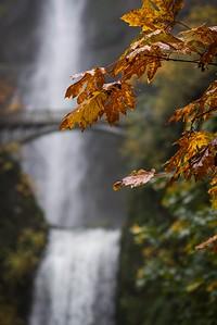 Foliage at Multnomah Falls (Nick Wiltgen)