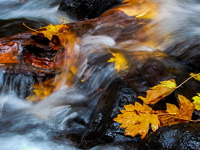 Leaves at Starvation Creek Falls (Tracy Aue)