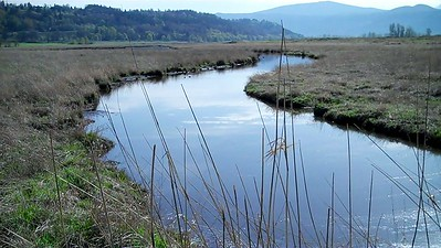 name:  Anna Sestrich   zip:  97005  (Beaverton, OR) e-mail:  foodfishweather@yahoo.com  date:  all 4 photos taken March 30, 2015  location:  all @ Steigerwald Nat'l Wildlife Refuge  Steiger Creek (taken from a lookout in Steigerwald Lake National Wildlife Refuge)