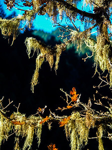 Moss at Eagle Creek (Tracy Aue)