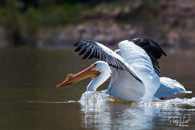 Roosevelt Lake Wildlife