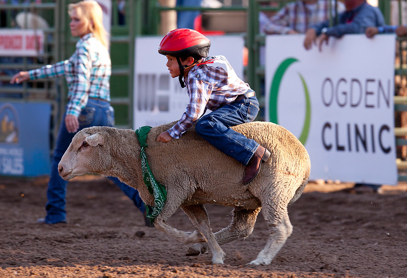 Kids participate in the sport Mutton Bustin. The object is to stay on the sheep as long a s possible. In Ogden, on July 19, 2014. (BRIAN WOLFER/Standard-Examiner)