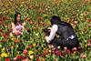 Tulip Fest 2013-041