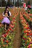 Tulip Fest 2013-043