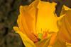 Tulip Fest 2013-038