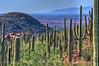 Cactus Mountain