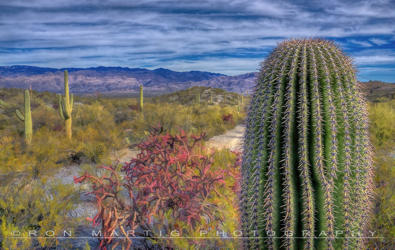 Catus View Trail
