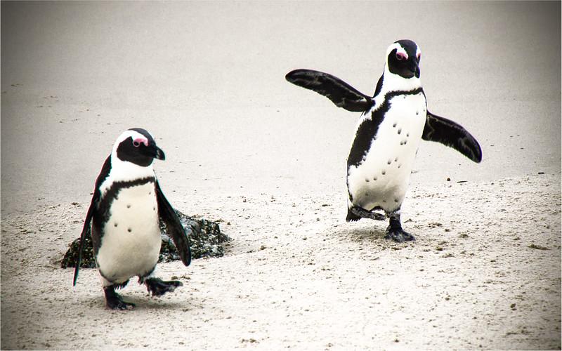 Penguin Hop