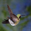 Horace the Hummer