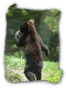 dsc_7408 baby bear 2