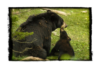 dsc_7860 mother_Cub_Black bear Kiss