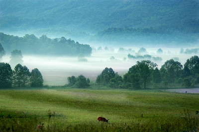 N.Carolina 2006