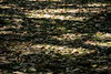 20130921-parque-ibirapuera-1761-alta
