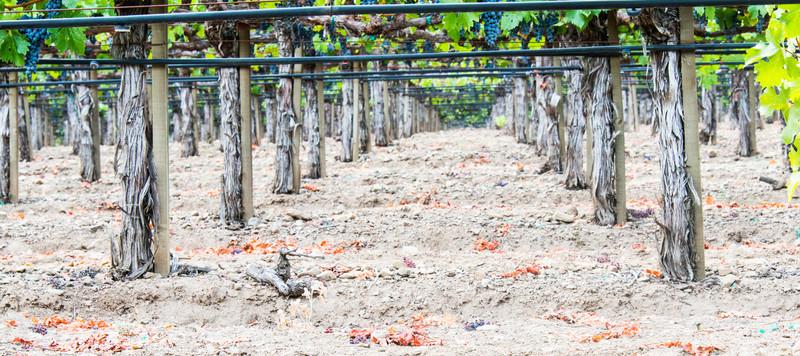 Beautiful Napa Vineyards