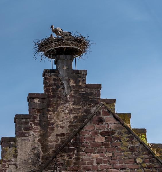 Stork Incoming!