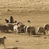 Shepherd and His Helpers