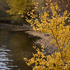 Stream at Mono Lake