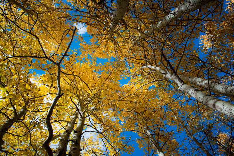 Golden Leaves and Blue Sky