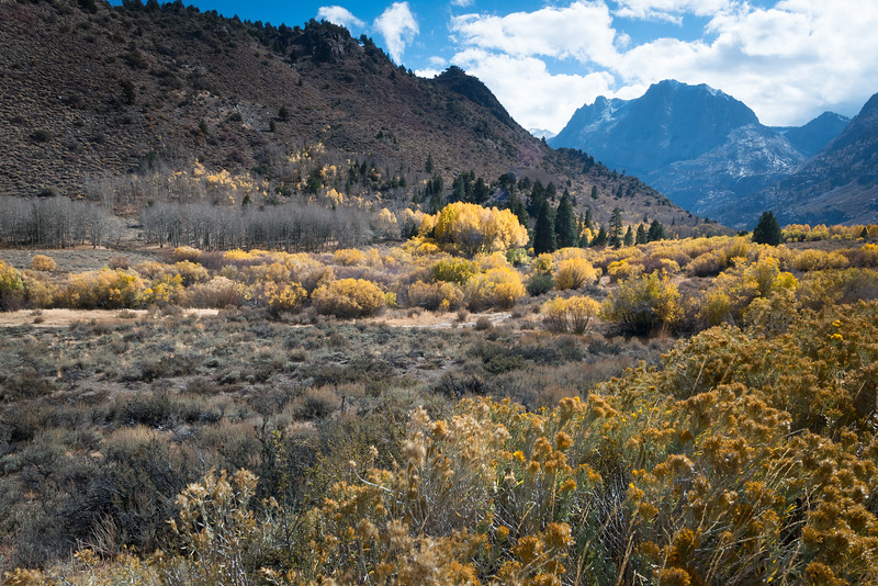 Fall Colors on June Lake Loop