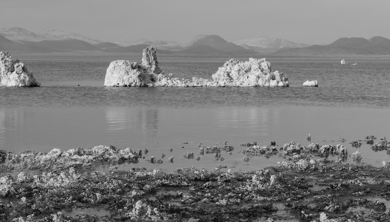 Shoreline and Tufas at Mono Lake