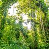 Giant Rain Forest