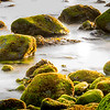 Mossy Sea Shore