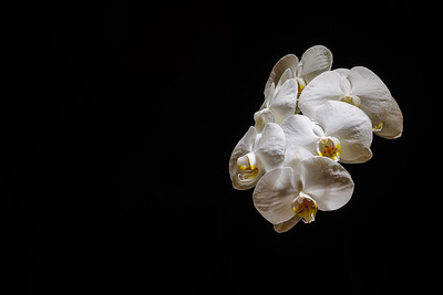 Space Orchid