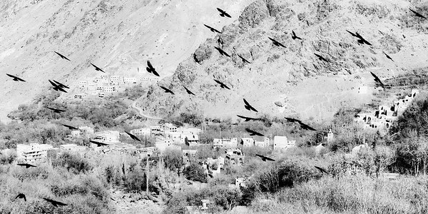 Birds of the Atlas Mtns
