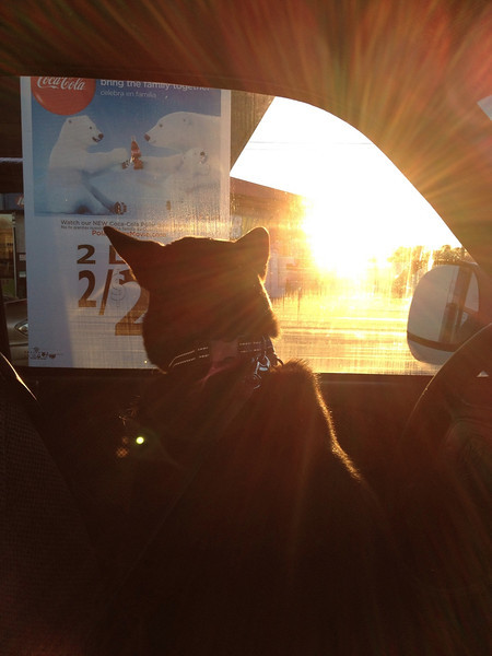 Sookie watching Brandon get gas.