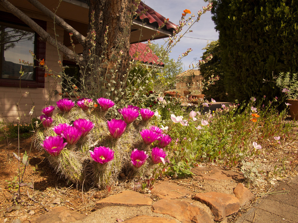 Sedona Motel Flora