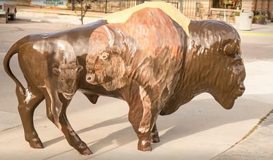 Buffalo #7