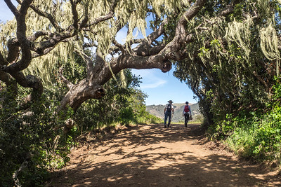 Hikers_Emerging_from -Trees