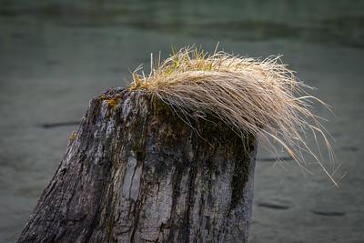Stump - Portage Creek, Alaska