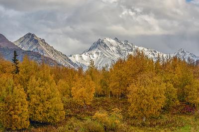 Fall in Alaska Near Palmer