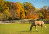 One Horse Enjoying Autumn On The Farm