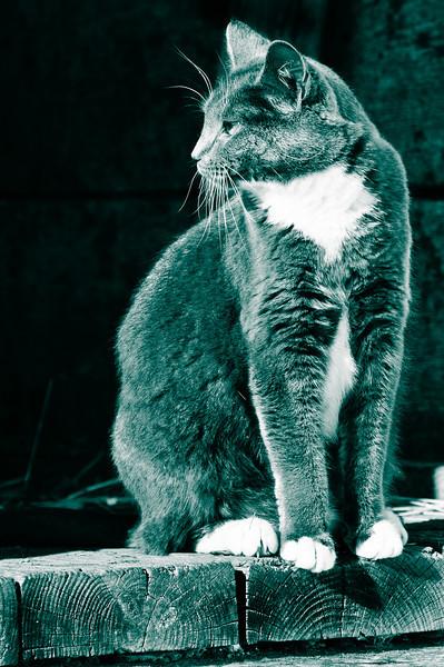 Holmdel Park Barn Cat BW