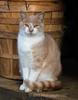 A Cats Stare