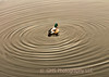 A duck makes ripples in calm water in Navesink at Riverside Gardens Park in Red Bank, New Jersey.