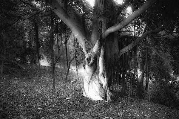 Tree eerie