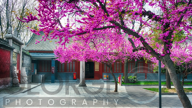 Pavilion with Trees Blooming, Beilin Museum Xian, China
