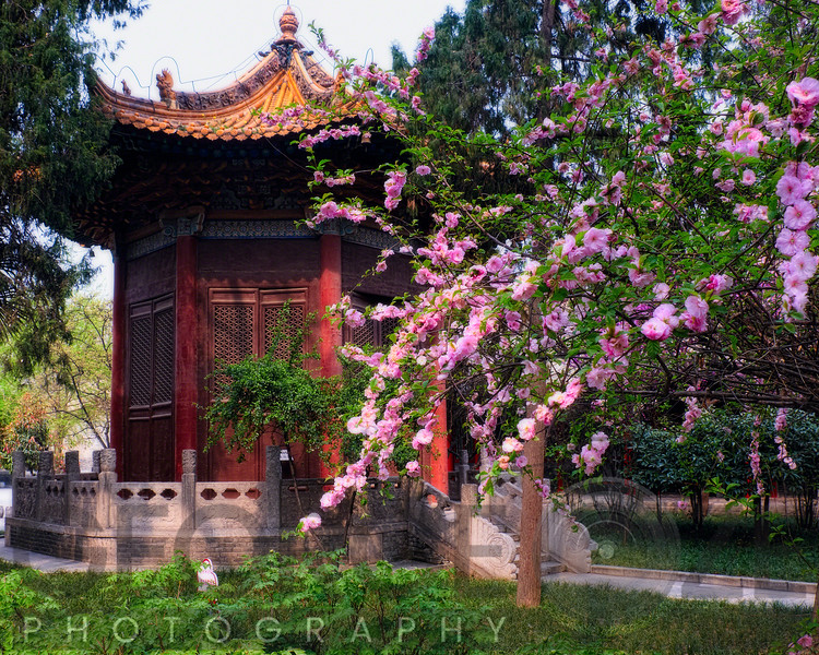 Garden Pavilion in a Garden with Blooming Cherry Trees, Beilin Museum Xian, China