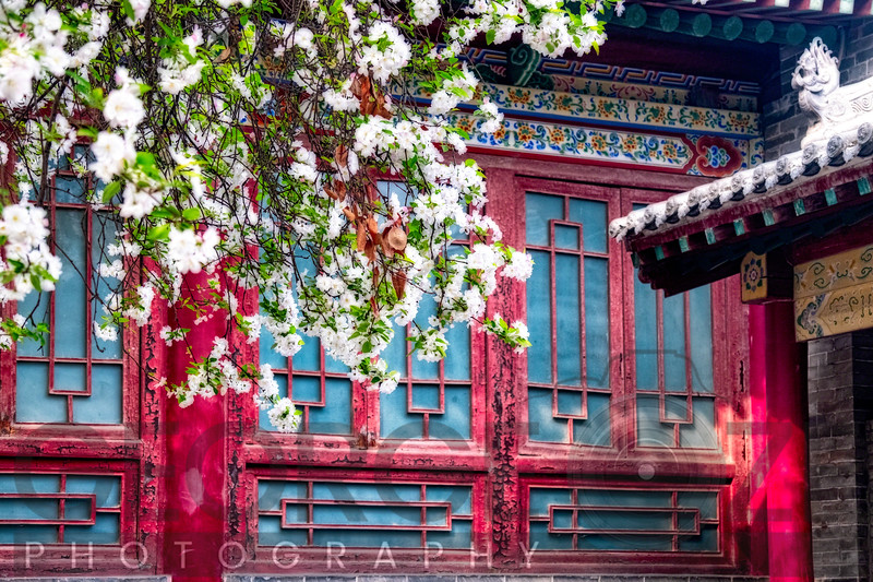 Blooming Tree in front of a traditional Chinese Building, Beilin, Xian, China