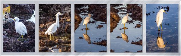 5-egret-panel.jpg