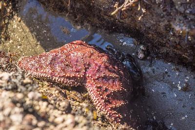 2015-Pacific_Grove_NewYears-36.jpg