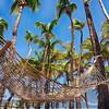 Hammock in a Palm Grove